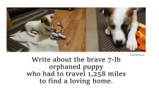 Orphan Puppy Writing Prompt